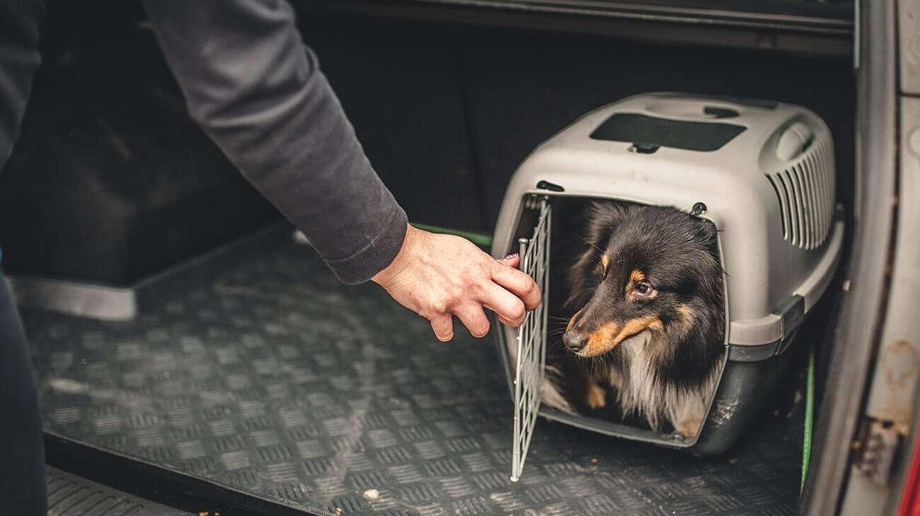 perro transportin en maletero del coche