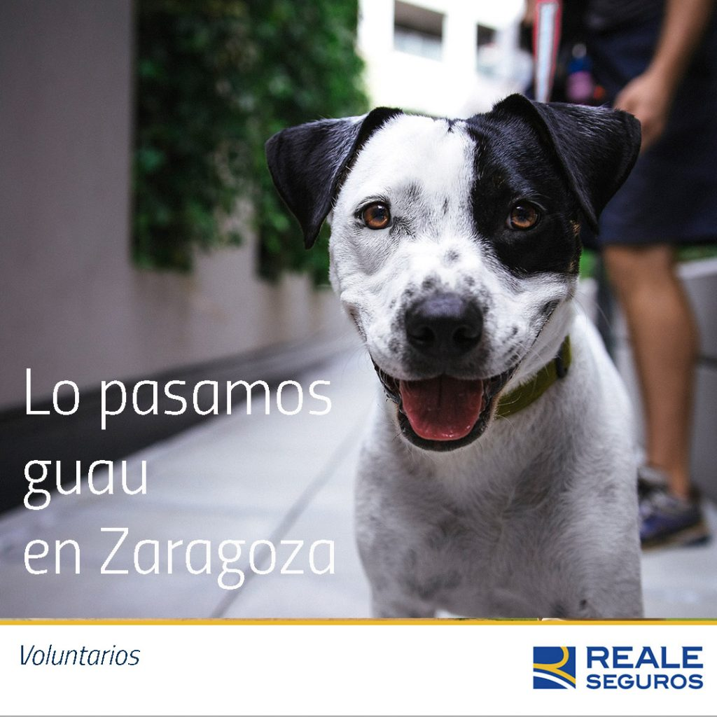 pasarlo guau en Zaragoza